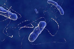 Bacteria Testing Monterey