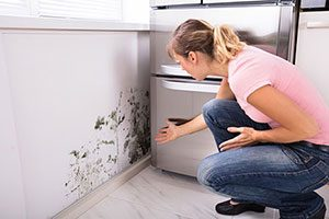 mold-prevention