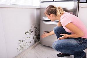 mold-prevention