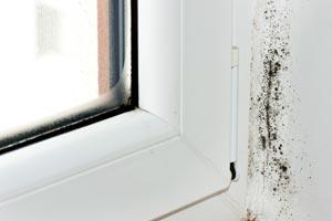 Mold Testing Monterey